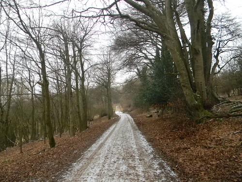 Snowy path 2