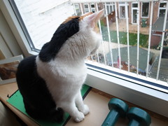 cat looking at rainy weather