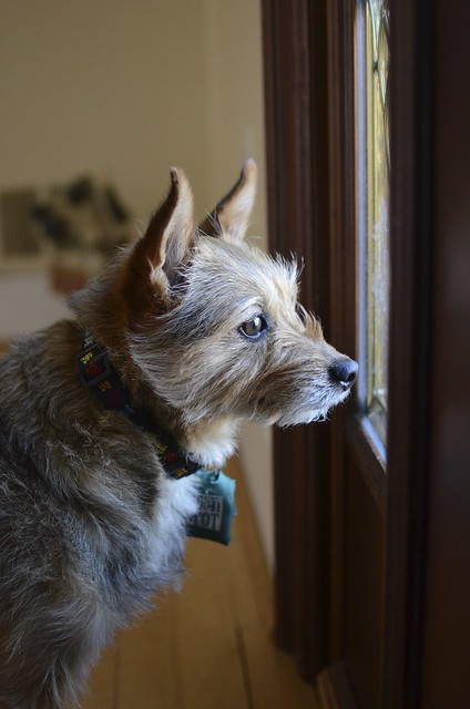 How much is that doggie staring out the window?