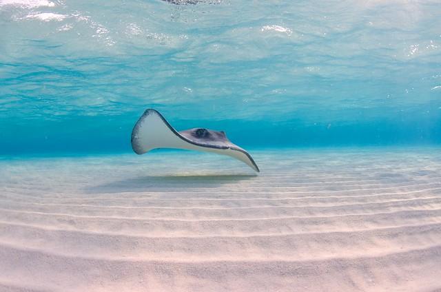 Stingray-Cayman-Sandbar 520