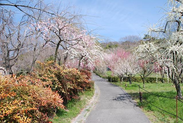 plum_garden_12