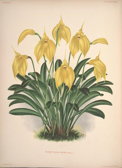 Lindenia :iconography of orchids v. 6-7 1893-94