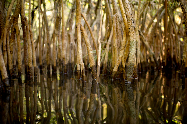 RYALE_Everglades-076