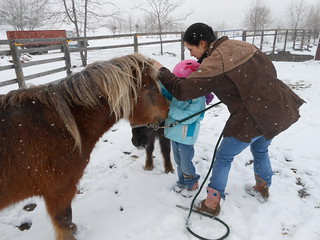 Horse Lessons 22Mar13 Treat Time (2)