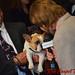 Randall interviewing French Bulldog - DSC_0114