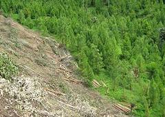 祕魯亞馬遜森林裡遭砍伐的陡坡。(攝影:Gino Cassinelli)