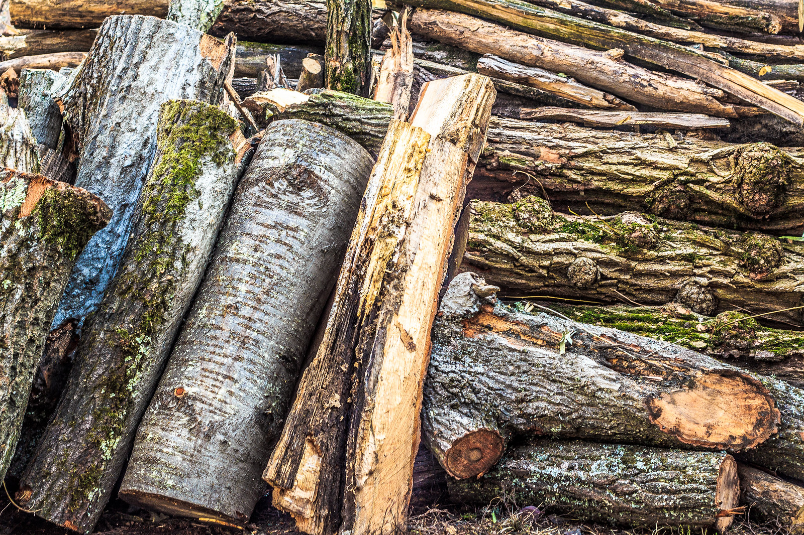 logs forest cut lumber buy picture