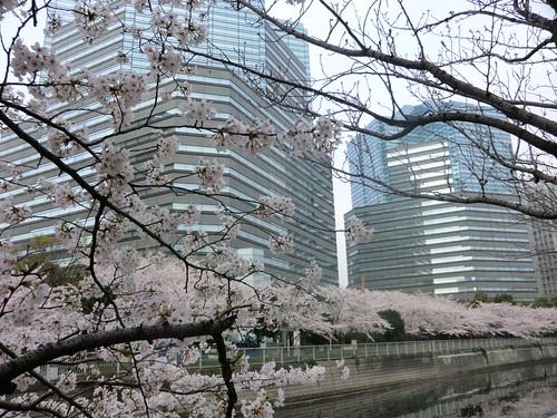 目黒川はピンク色