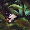 Un nostro nuovo ospite nella Junior Suite #jungle #love #cat