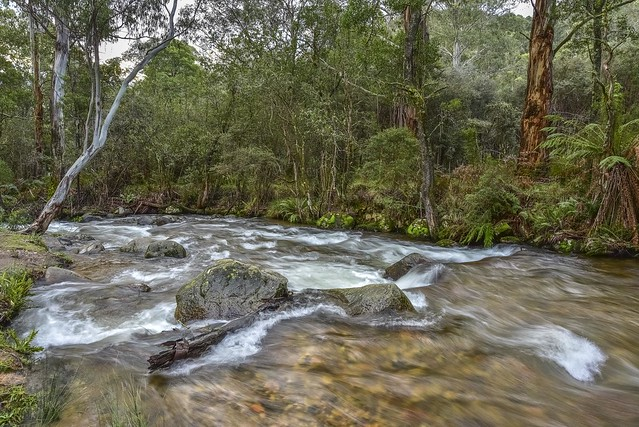 Featured medium photo of Mount Buller on TripHappy's travel guide