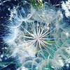 #flower #picoftheday