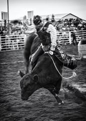 bull_rider_3