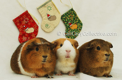 Guinea pig crafts Christmas gift stockings