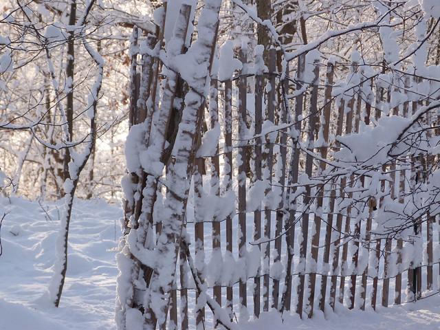 snowyfence