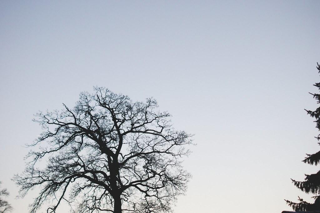 træ_4