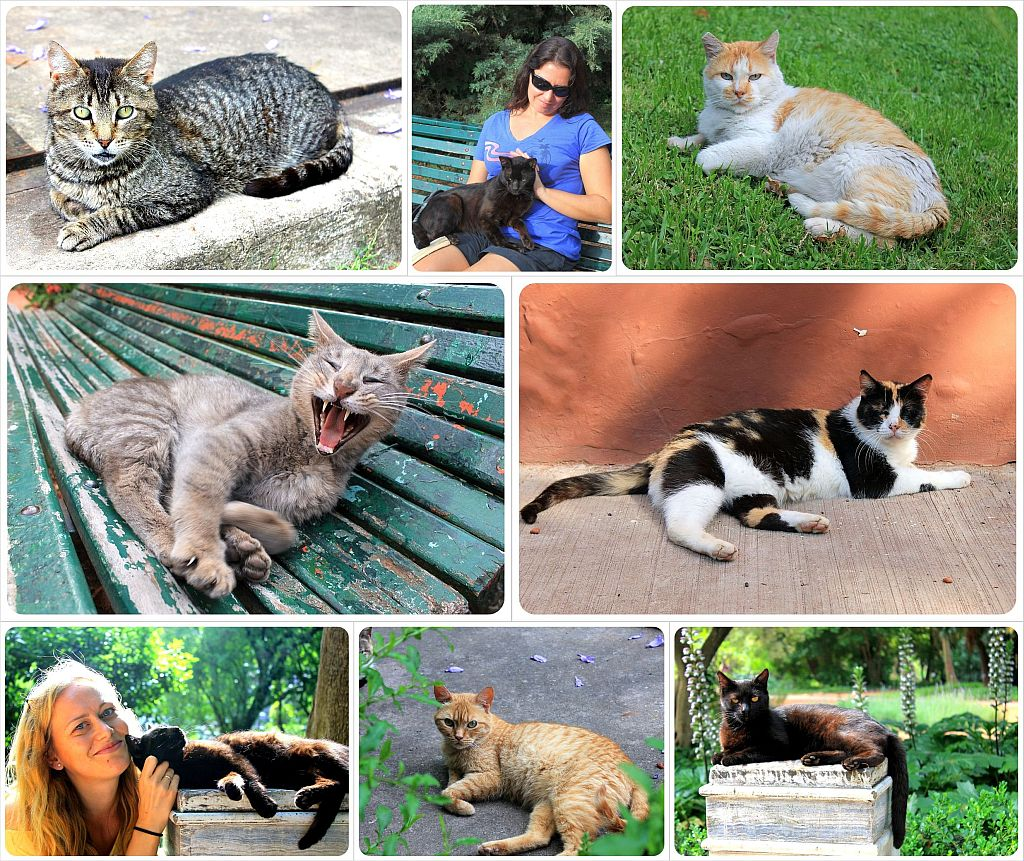 cats in buenos aires