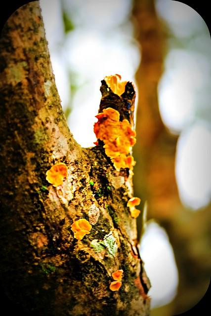 15.365 {Moss Fungus?}