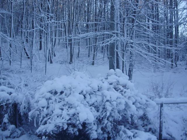January Snowfall 2013
