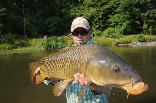 shawns carp