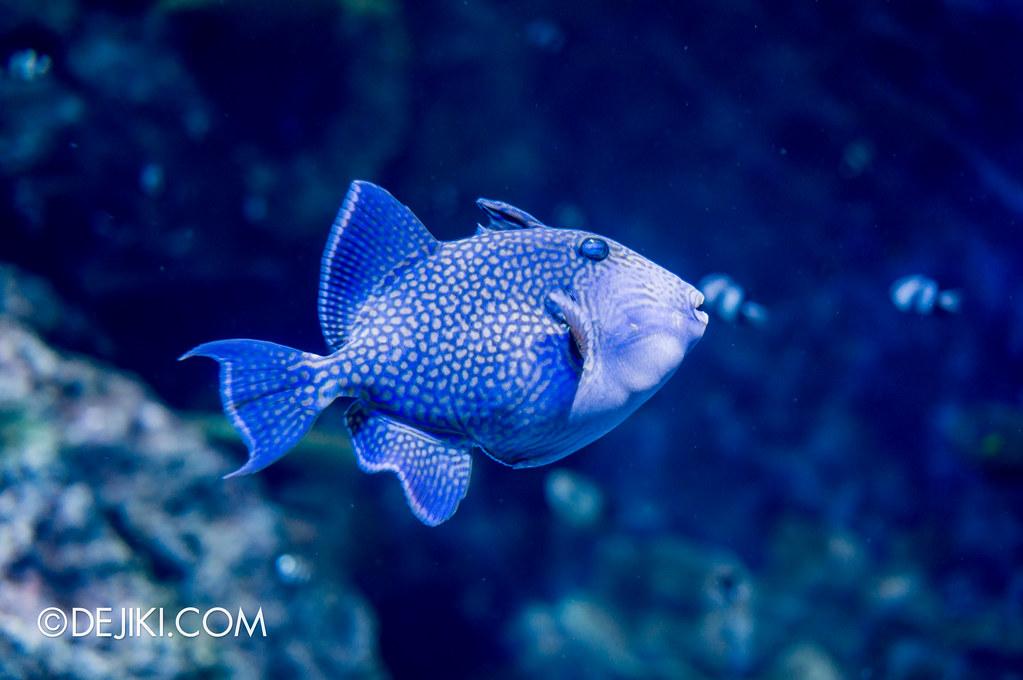 S.E.A. Aquarium - Spotted in blue