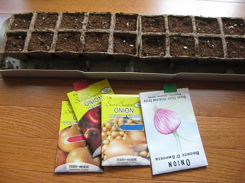 Seed starting onions