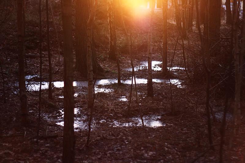 i skogen med saga