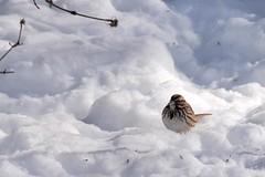 post blizzard 018 (2)