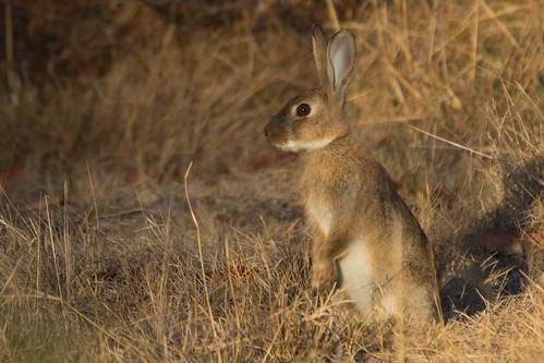 Hare 2013-02-17 (_MG_0335)