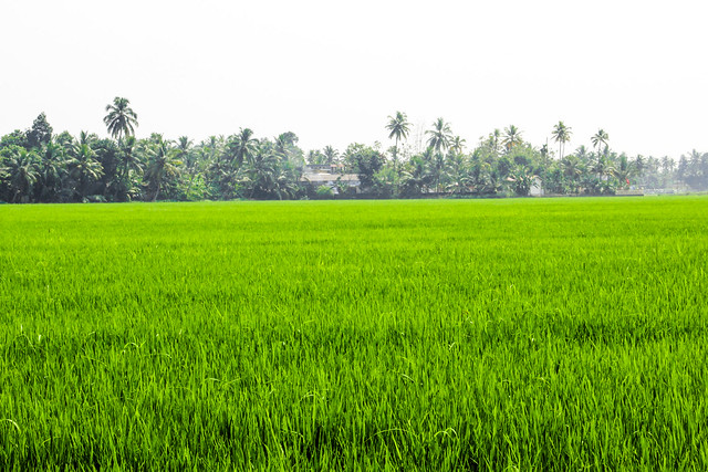 Kuttanad (3 of 1)
