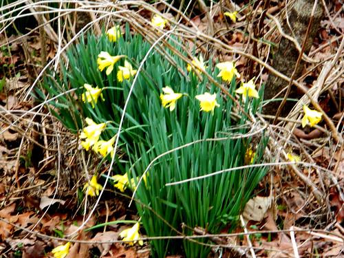Spring--NOT!
