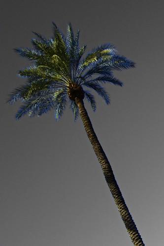 2.26 - A Single Palm
