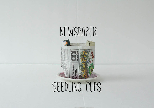 seedling-cups3-(1-of-1)