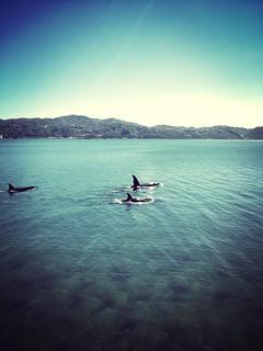 Image of Oriental Beach. orientalbay uploaded:by=flickrmobile flickriosapp:filter=mammoth mammothfilter