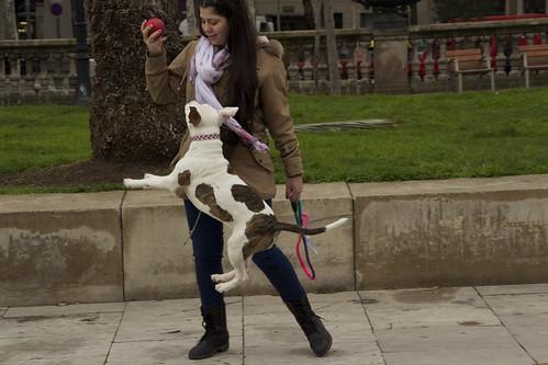 Brinquedos para cães - Petlove - O Maior Petshop Online do Brasil