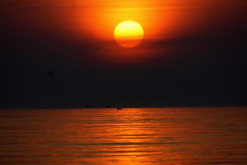 [フリー画像素材] 自然風景, 朝焼け・夕焼け, 太陽, 海, 水平線 ID:201303221600