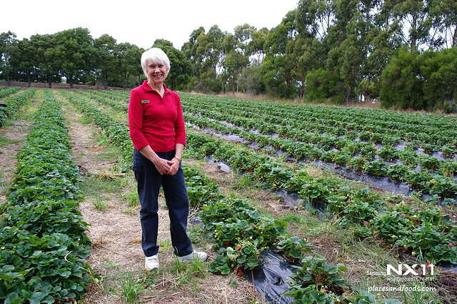 sorrell fruit farm owner
