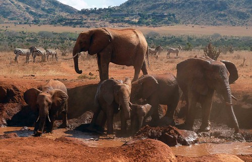 park kenya wildlife elephants tsavo nikond90