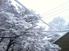 branch, winter, tree, snow, rain and snow mixed, frost, blizzard, freezing,