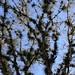 Bromeliads in trees - bromelias en árboles; entre Santa María Temaxcalapan y Villa Alta, Región Sierra Juárez, Oaxaca, Mexico por Lon&Queta
