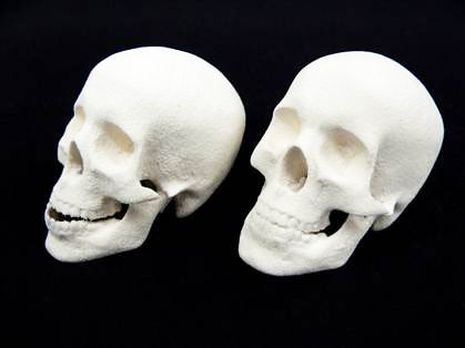 Skulls printed using 3D print technology in UWE ceramic material on a ZCorp 510 3D printer