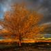 Wild tree, suburbs Madrid, Spain by Edward L. Zhao