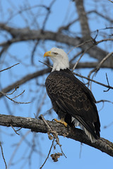 Eagle_43446.jpg by Mully410 * Images