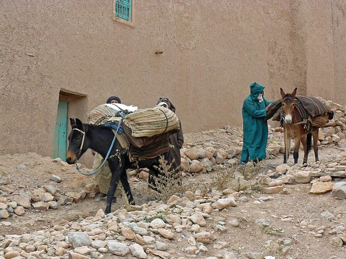 Cargando las mulas en Ait-Hani, pueblo bereber del Atlas Medio (Marruecos)