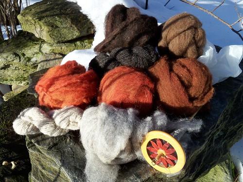 eight colors shetland