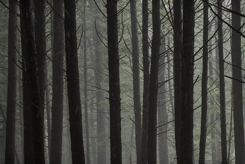 trees forest dark ma woods foggy trunks holyokerange deepwithin nearlithiaspringsreservoir