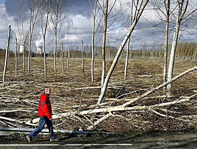 plantation de peupliers abattues par Klaus dans la vallée de la Garonne météopassion