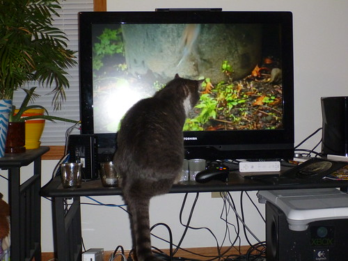 "Rajah Watching ""Bird Language"""