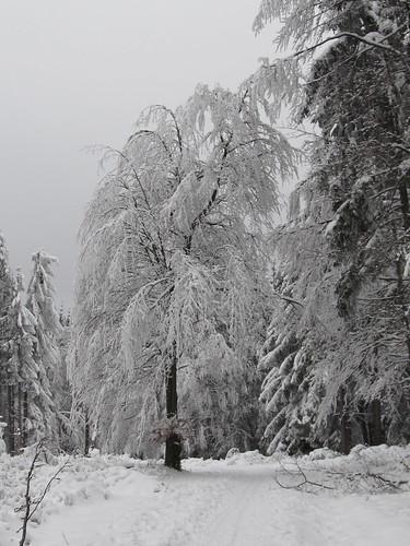une journee a la neige aux donon 046