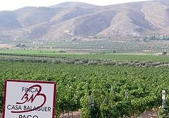 De Alicante a la Patagonia una historia de vinos