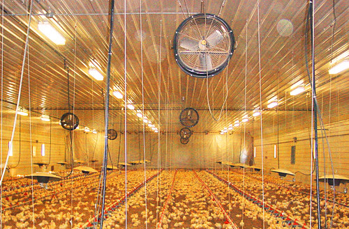CONNECT Poultry Farm Equipment,CONNECT Rendering Equipment,CONNECT Processing Equipmen